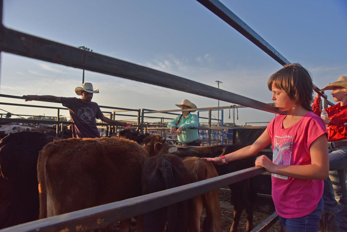 Petting a calf