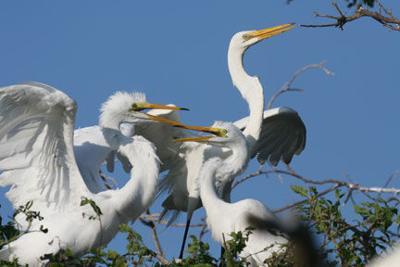 White Oak River Birding Cruises begin in April
