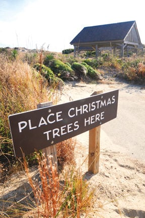 Fort Macon Christmas Trees 2020 Christmas trees fortify dunes at Fort Macon   News
