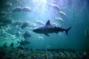 Sink your teeth into Shark Week