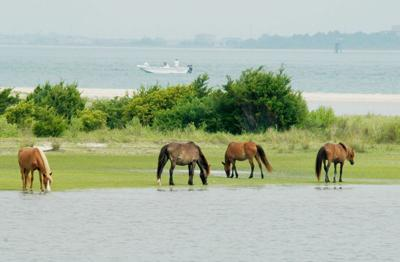 Core Sound Waterfowl Museum to celebrate Shackleford Horses Foundation with photo competition, exhibit