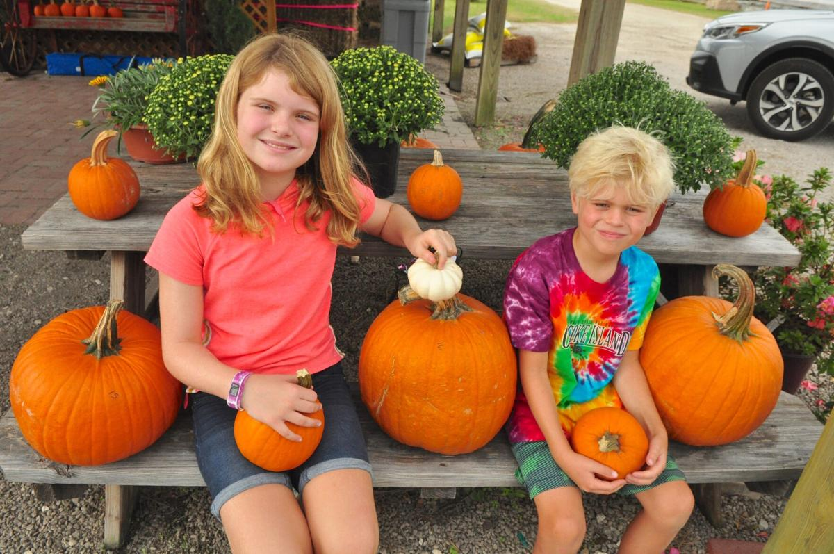 With safety precautions in place, Garner Corn Maze & Pumpkin Patch opens