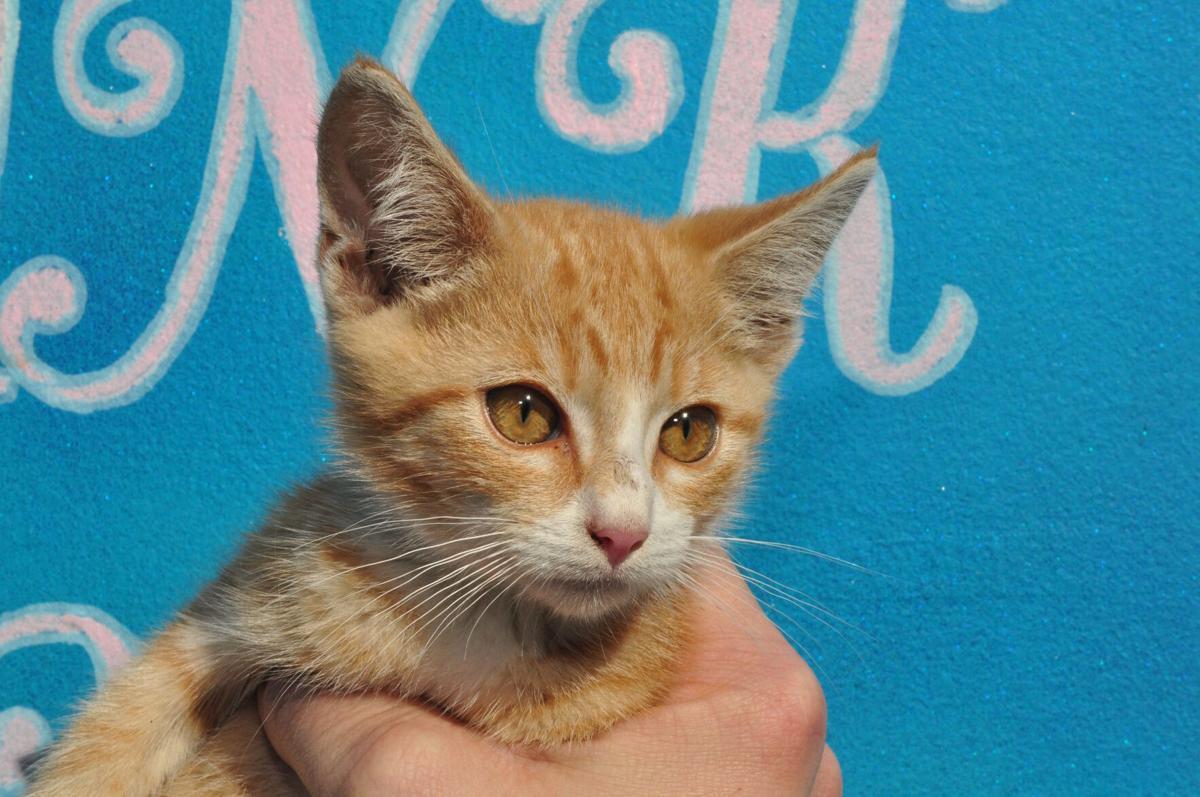 Adopt-a-pet: Nov. 22