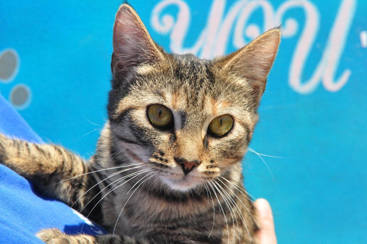Adopt-a-pet: May 2