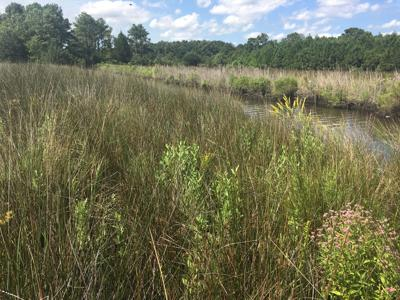 NC Coastal Federation announces statewide stormwater plan