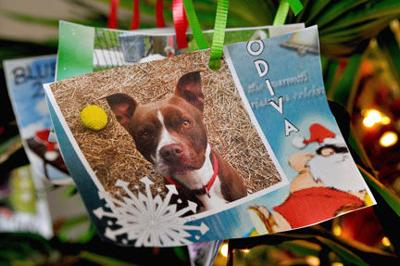 Christmas in July to help shelter pets