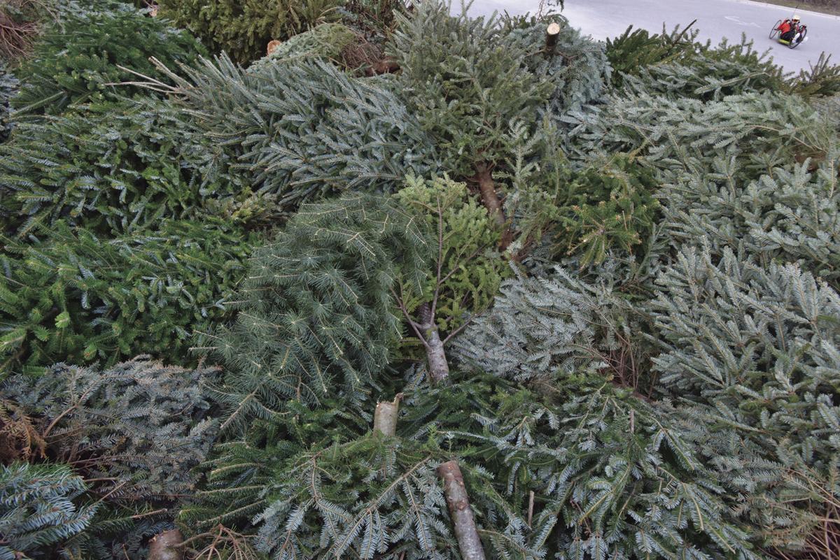 Fort Macon Christmas Trees 2020 Fort Macon accepts natural Christmas trees   News