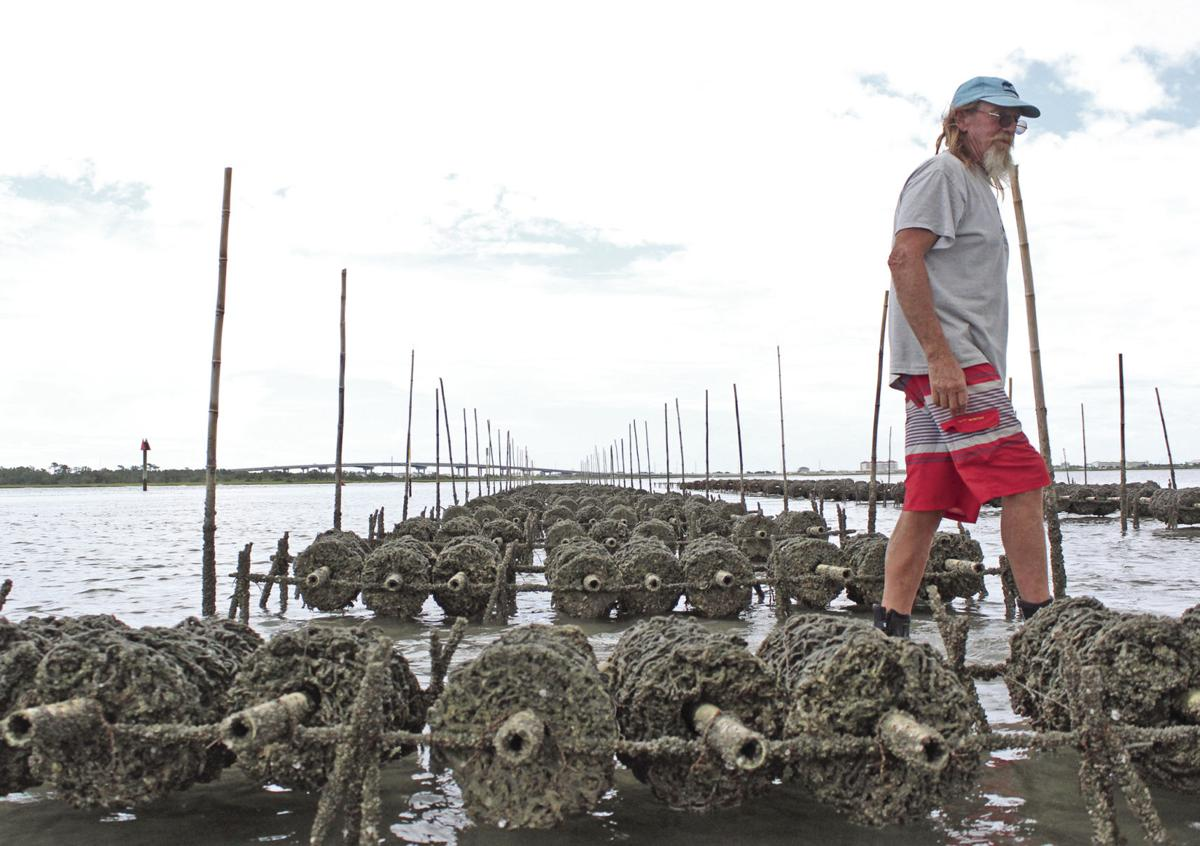 OYSTER ALLIANCE