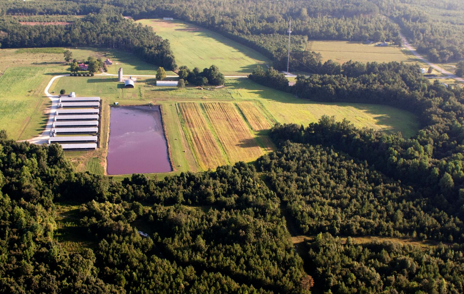 Environmental lawsuit challenges NC biogas production from hog waste