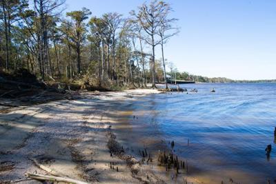 MCAS Cherry Point partners with Duke to research reintroduction of native oyster species