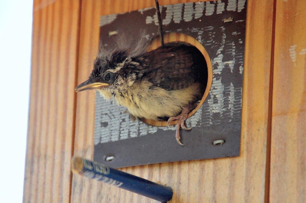 GALLERY: Baby birds create springtime adventures