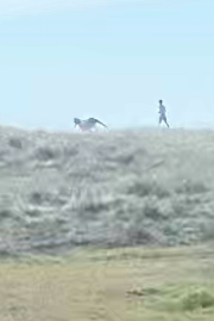 NPS seeks information on tourists who harassed wild horse