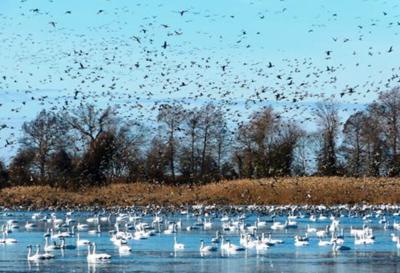 NC Coastal Federation to discuss restoration efforts at Lake Mattamuskeet