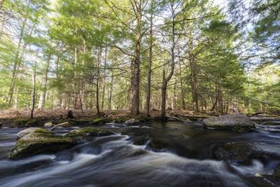 SELT Conserves Leighton Forest