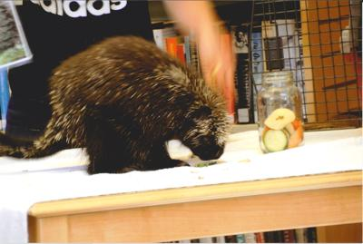 The Porcupine: Lesson Learned