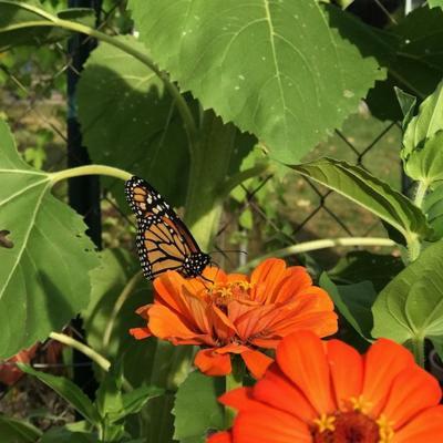 Pollinator Conversations: Seeds for Next Year's Pollinators