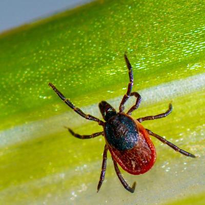 DHHS Identifies Jamestown Canyon Virus and Powassan Virus in NH