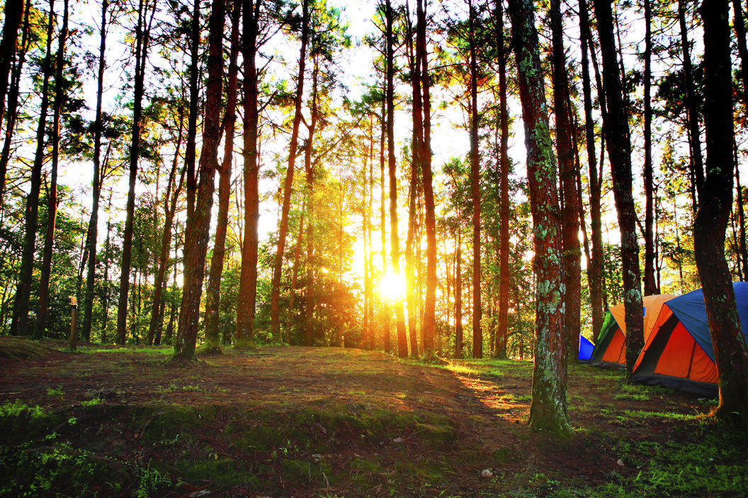 Go Camping in New Hampshire this Summer | News