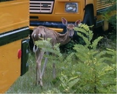 Help Prevent Chronic Wasting Disease in NH