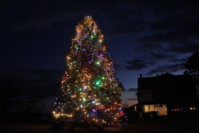 Robinson farm shares its Christmas tree