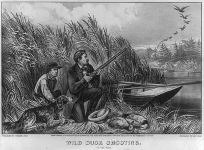 Wild Duck Shooting