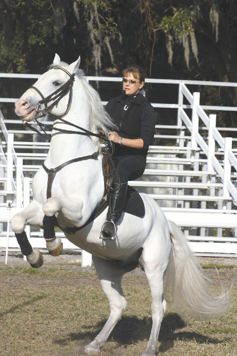 Fairwinds Customer Service >> Herrmanns' Royal Lipizzan Stallions to perform at ...