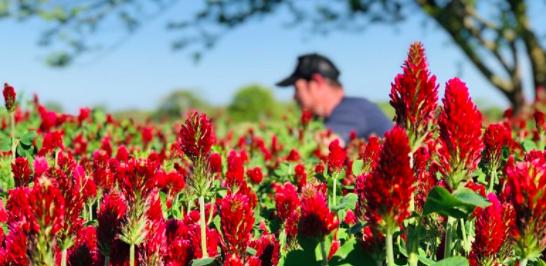 Learn about low-till flower farming in a webinar Sunday