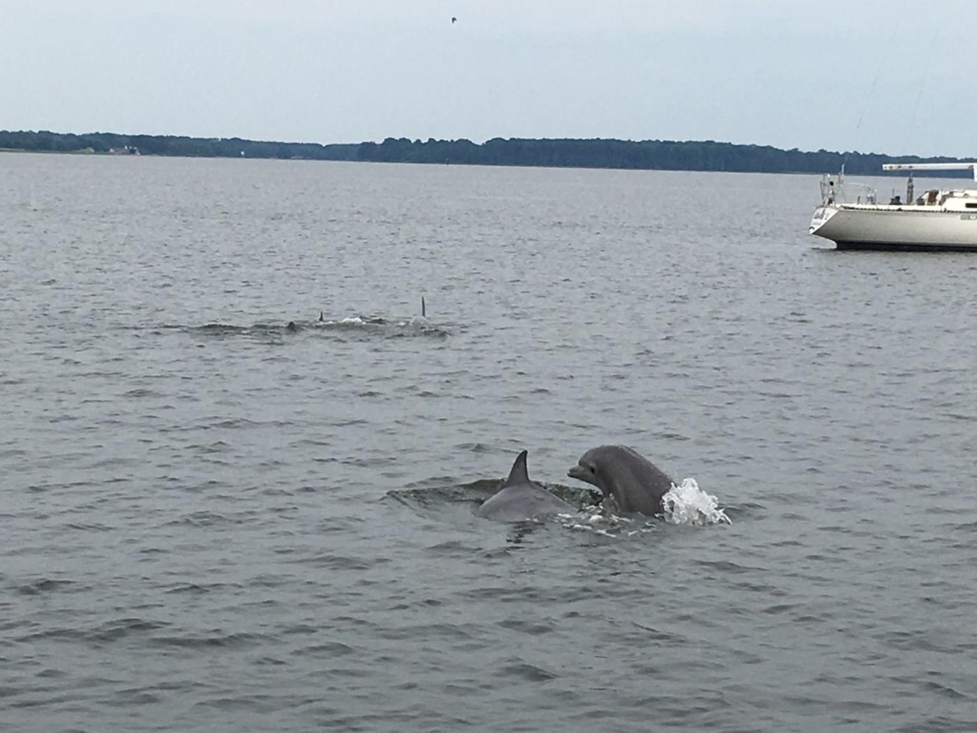 Dolphins return to the Bay
