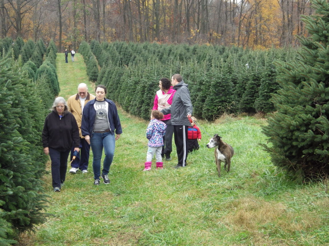 Pine Valley Christmas Tree Farm