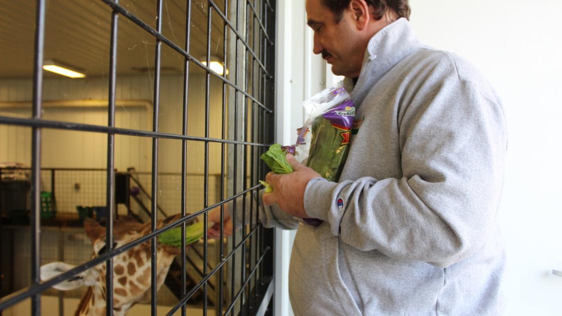 Plumpton Park Zoo closes, but needs help feeding its animals