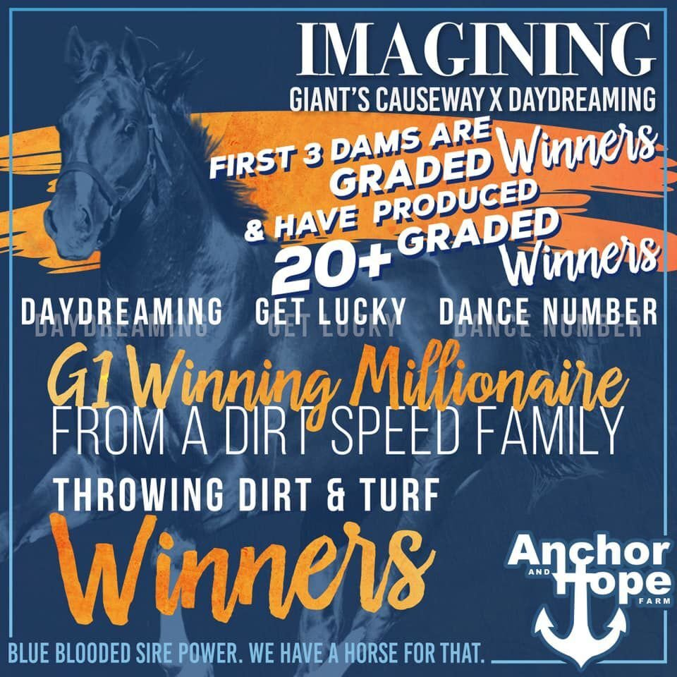 Anchor & Hope lowers stud fees for 2021