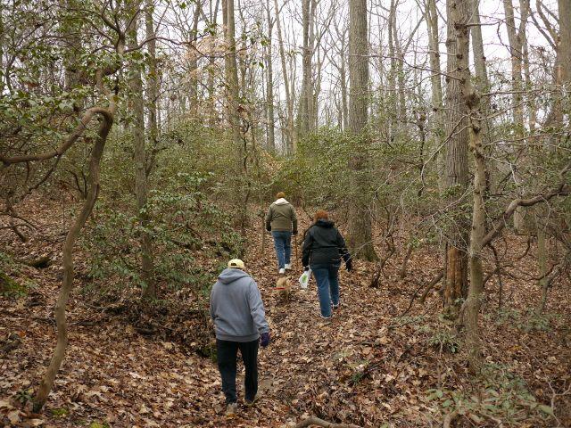 Hiking through mountain laurels