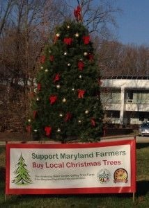 The 19 Foot White Pine Decorated At The Maryland Department Of Agriculture  In Annapolis Is From Deer Creek Valley Tree Farm In Street.