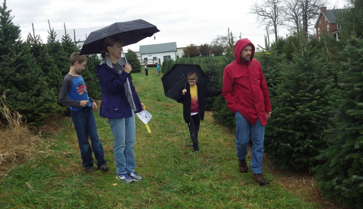 Christmas officially begins at Pine Valley Tree Farm ...