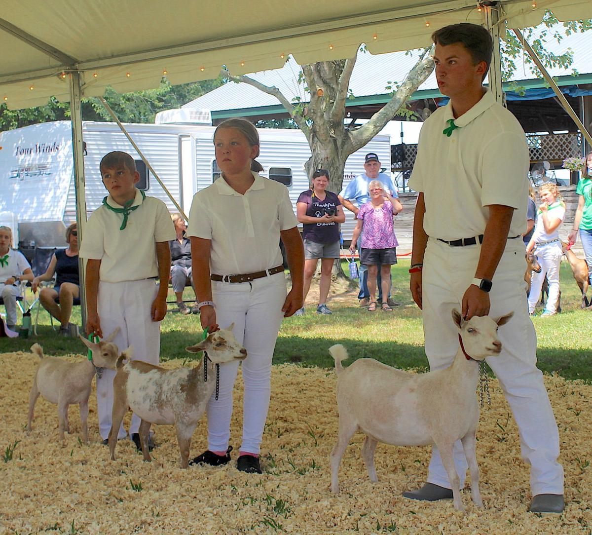 QA Fair 4-H Goat Show 2019