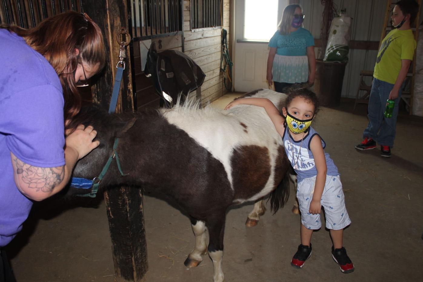 Ay'den Pets Horse