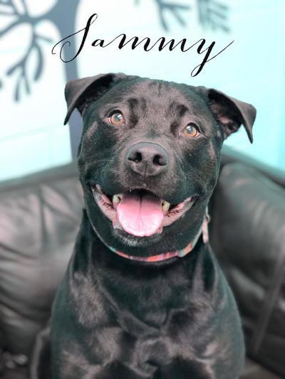 Dog of the week: Sammy