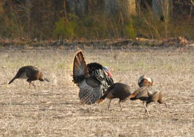 Spring turkey hunt a success
