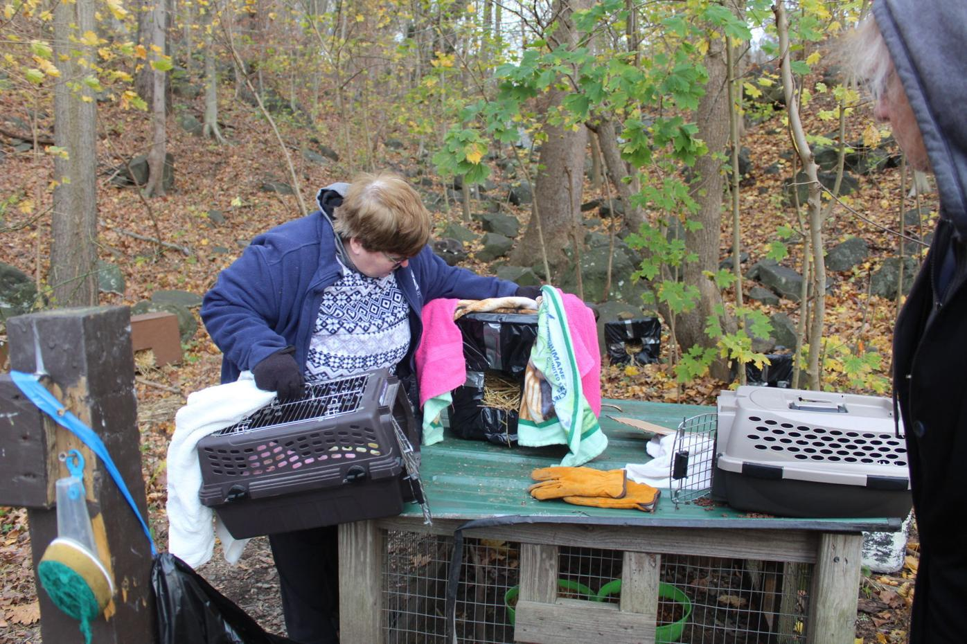 CCAS investigating the shooting of feral cats in Conowingo