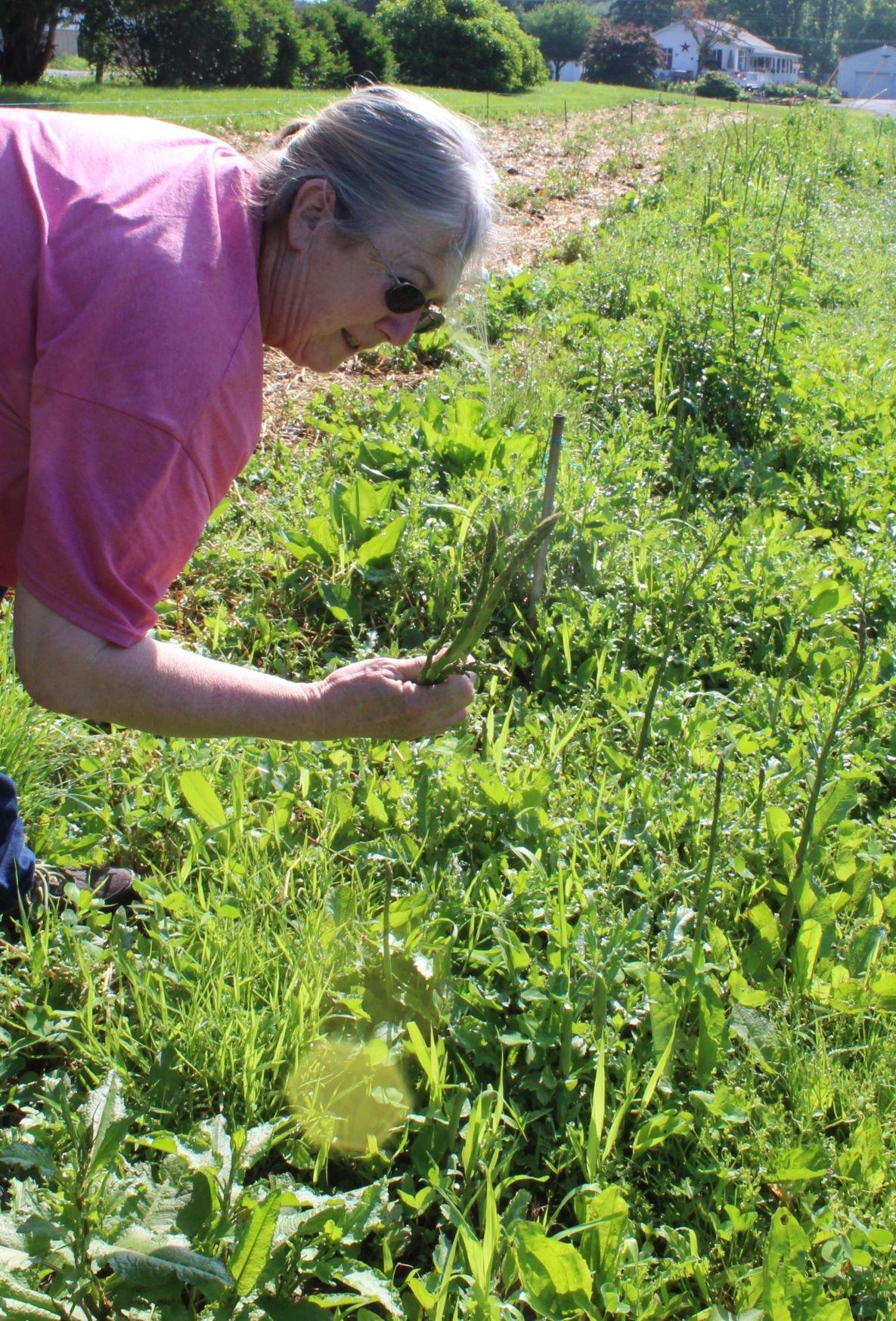 Organic produce, foods gaining popularity