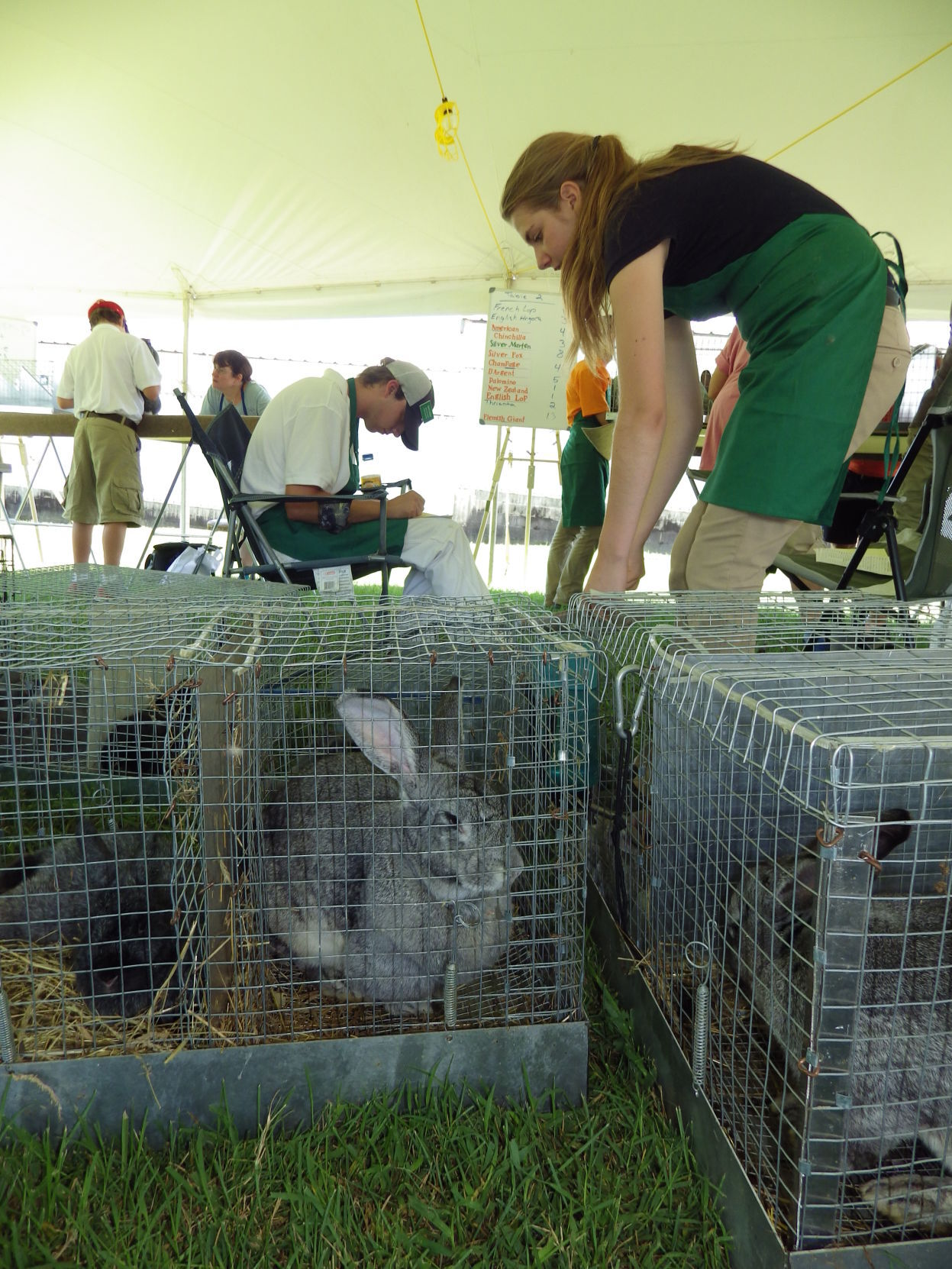 Cecil County 4-H competitions will abound at the Cecil County Fair.