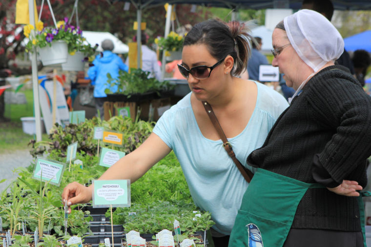 Saint Mary Anne's Garden Market (for 2017 preview)