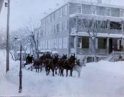 Horse Drawn Carriage in Elkton