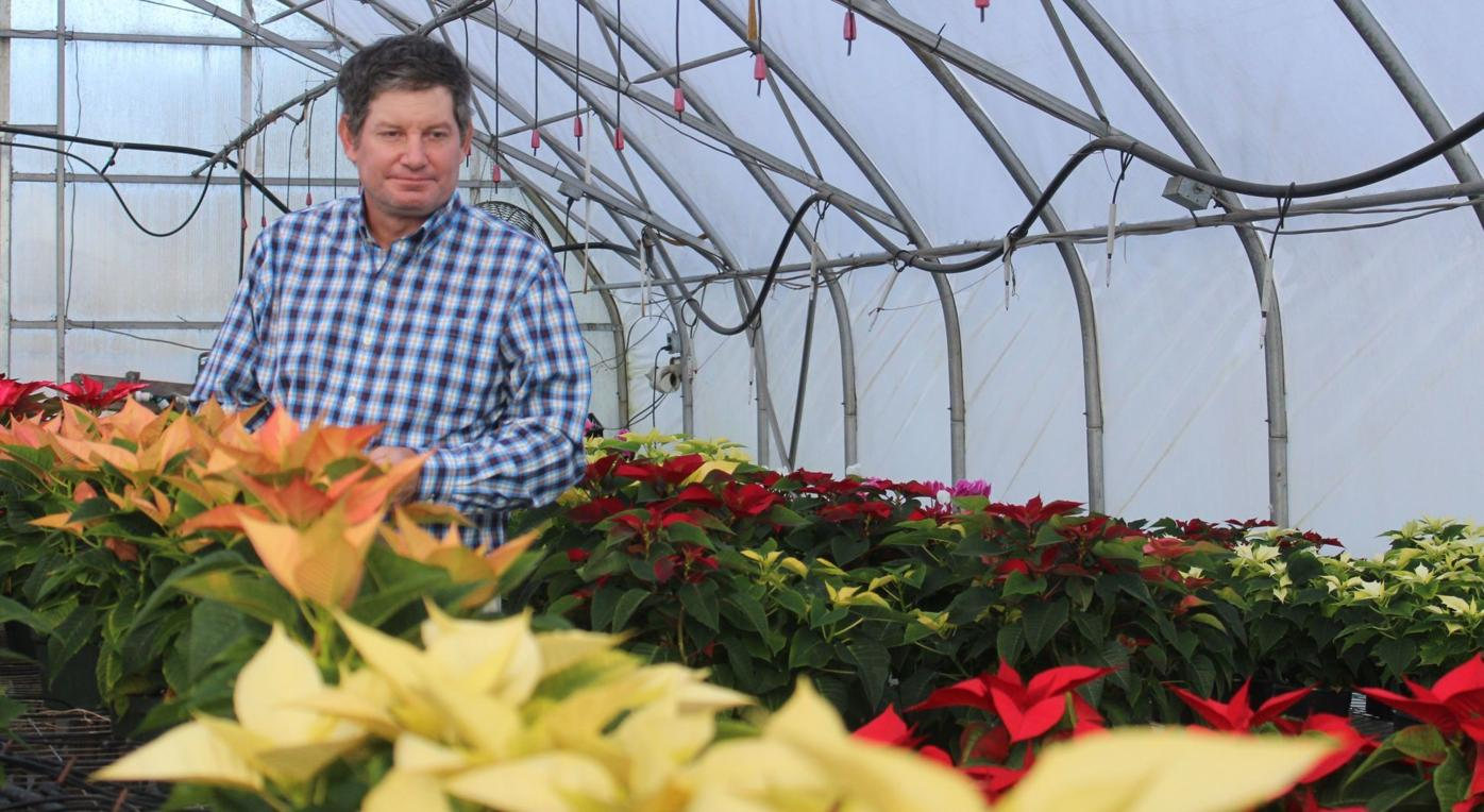 Cline Mum Farm and Greenhouse gets in the Christmas spirit