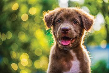 Dog license fees go up