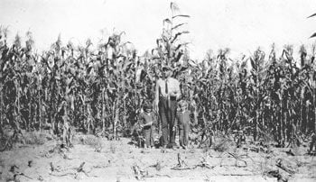 Decker corn field