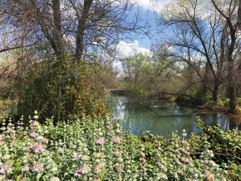 Chino Creek Wetlands