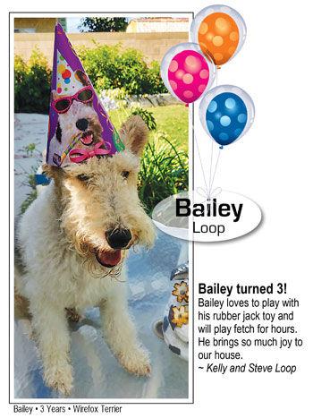 Bailey Loop