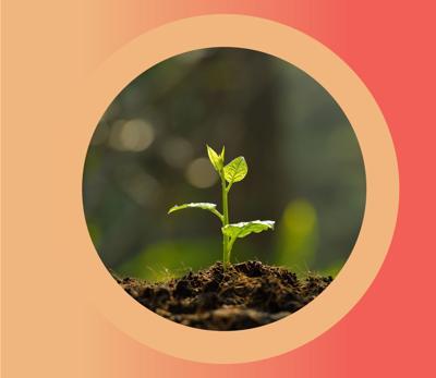Building the Best Soil