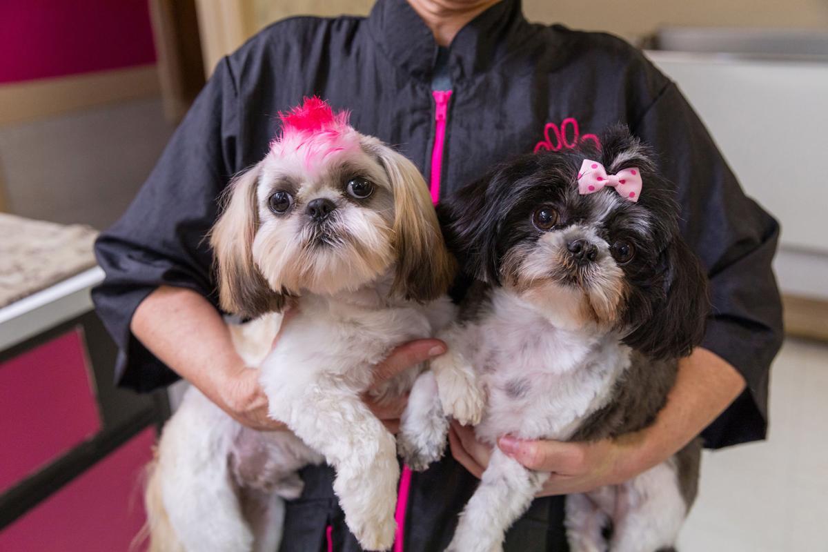 The Pet Beauty Shop